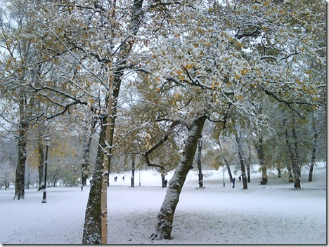 Fresh snow on autum trees